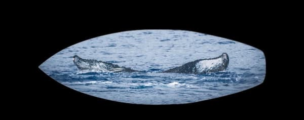 Whale Tail | Soaring Whales Photography LLC
