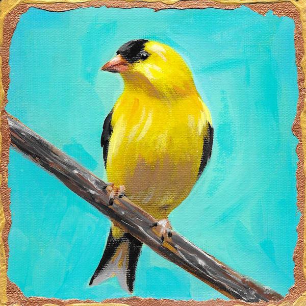 American Goldfinch Art | Channe Felton Fine Art
