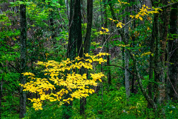 Fall Rising - Smoky Mountains autumn colors fine-art photography prints