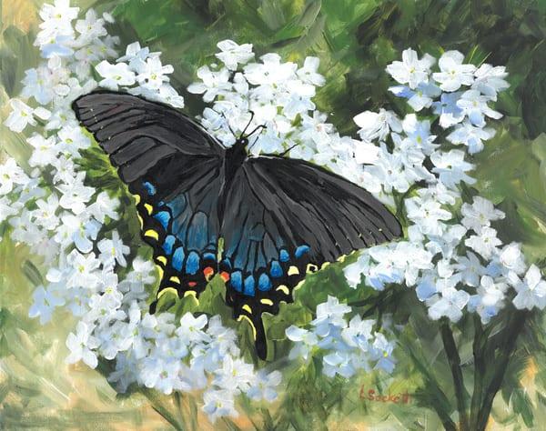 Black Swallowtail  Art   Linda Sacketti
