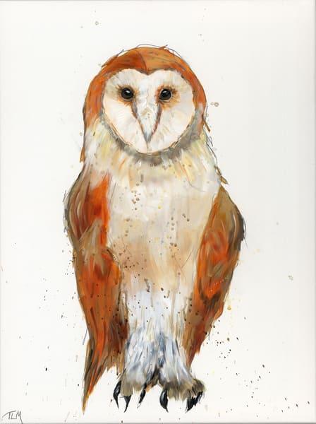 Barn Owl - Terry MacDonald