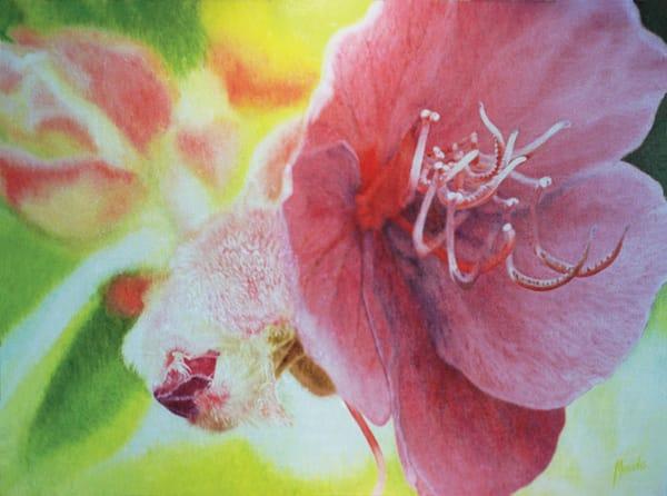 Flower Of The Glory Bush   Original Art   Mercedes Fine Art