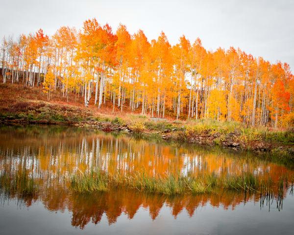 Aspen Reflections Colorado Fall Colors Aspen Water Reflection Landscape Photography