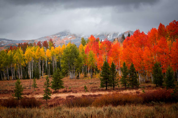 Steamboat Springs Colorado Fall Autumn Aspens