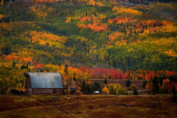 Fall Color Farm Barn in Aspen Leaves Steamboat Springs Colorado