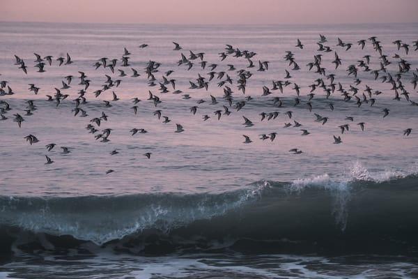 Ocean Flight Photography Art   nancyney