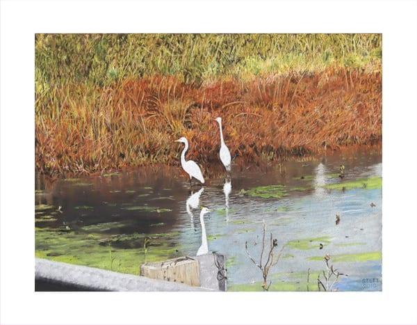 Egrets At Mannington Meadow Art | Greg Stett Art