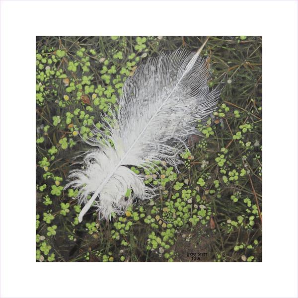 Swan Feather On Pond Art | Greg Stett Art