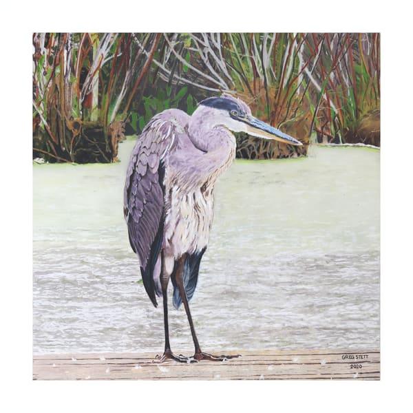 Wary Heron Art | Greg Stett Art