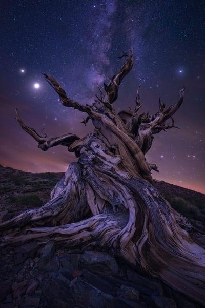 'Roots & Sky' Photograph by Jess Santos for sale as Fine Art