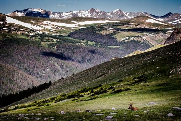 Bull Elk Rocky Mountain National Park Photography Wall Art