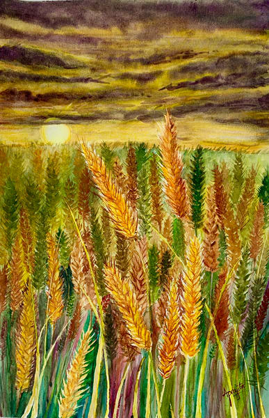 """""""Golden harvest"""" in Watercolors by Aprajita Lal"""