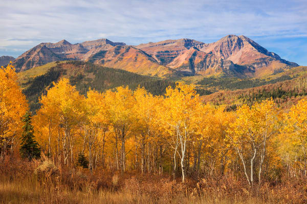 yellow aspens with timpanogos from mill canyon peak