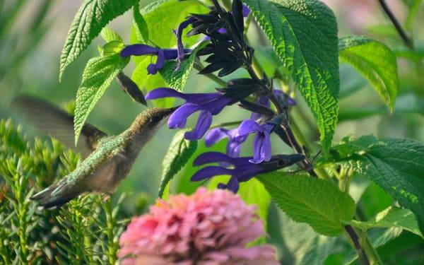 A Hummingbird Encounter Like Never Before