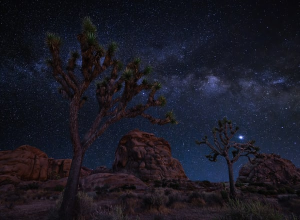 Joshua Tree Starlight Photography Art | Josh Kimball Photography