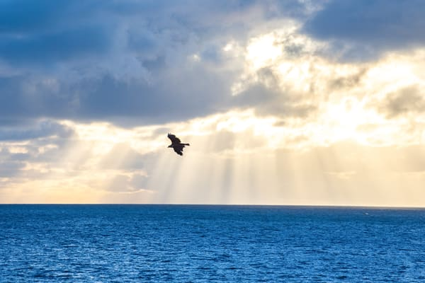 Osprey Sunrise Photography Art | Burke Young Photography