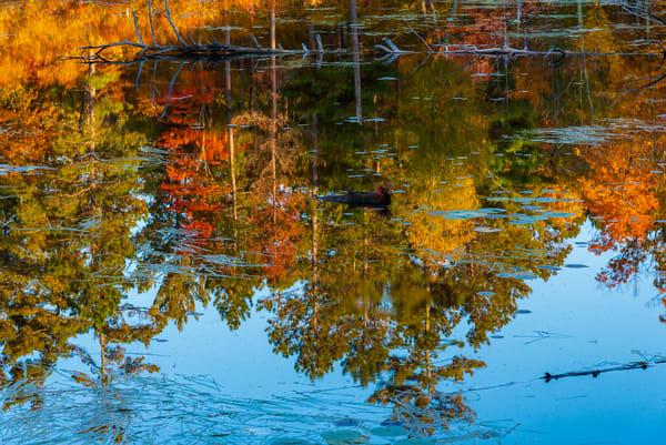 Autumn Reflection - Itasca