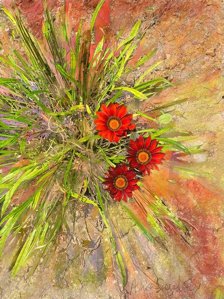 Three Red Suns  Art | Ashira Siegel Fox