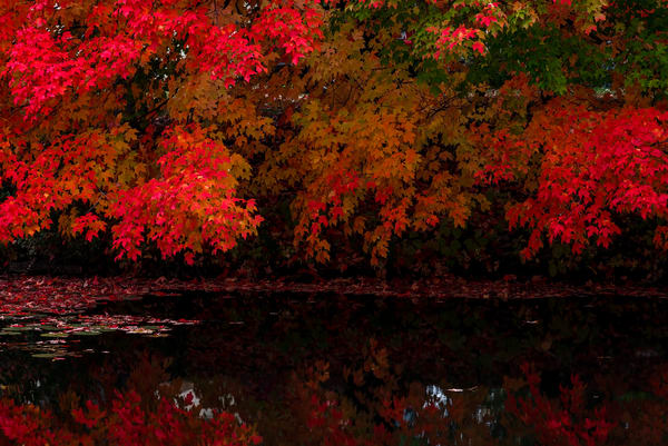 Fall on Fishhook River, photography by Jeremy Simonson.