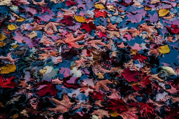 Colors - Autumn Leaves, photography by Jeremy Simonson.