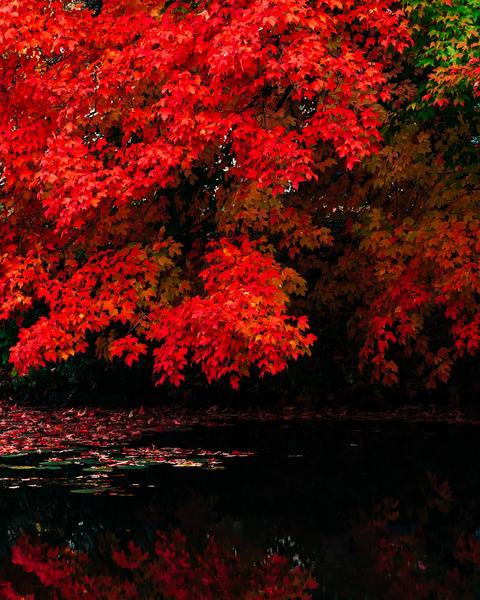 Autumn Red - Fishhook River, photography by Jeremy Simonson.