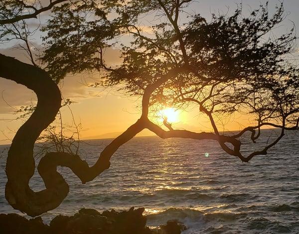 Sunset Through Trees Art | GGRGA INNOVATIVE SOLUTIONS LLC