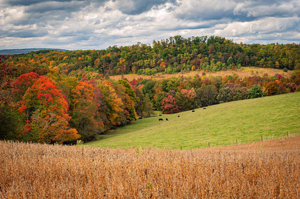 Rolling Hills and Fall Colors