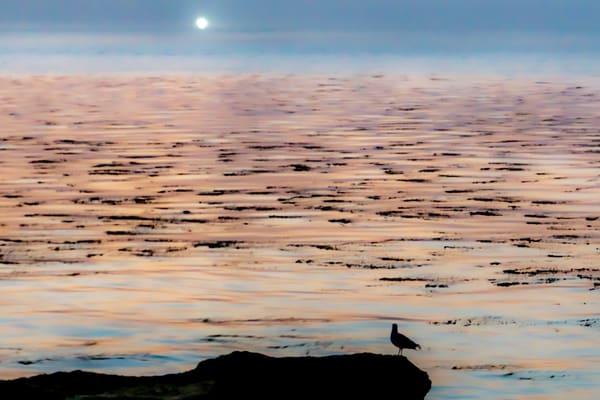 Morning Vigil Photography Art | Ron Olcott Photography