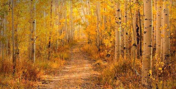 aspen road panorama yellow