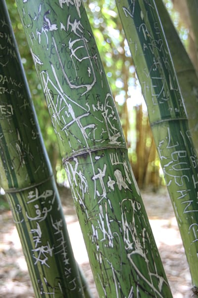Bamboo Through The Years Photography Art | Julie Williams Fine Art Photography