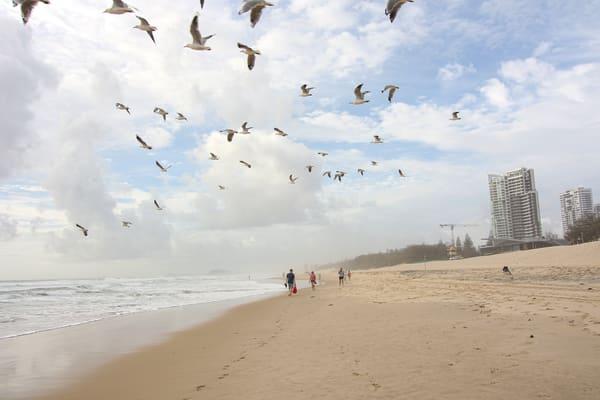 Birds Flying On Beach  Photography Art | Julie Williams Fine Art Photography