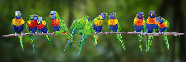 Aussie Rainbow Lorikeets at home by Greg Smith