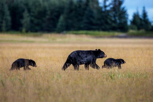 Black Bear Wildlife Wall Art