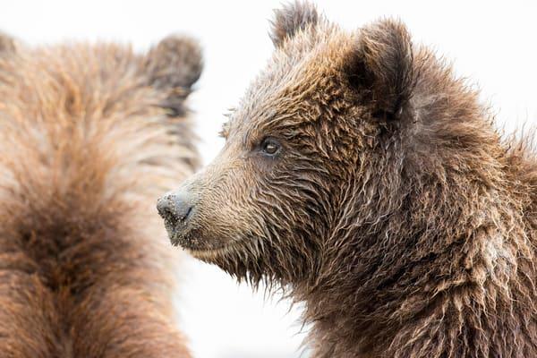 Bear Cub Photography