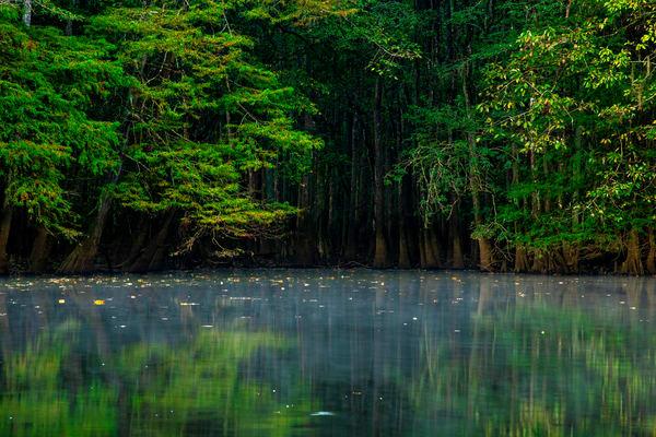 Weston Lake at Congaree National Park - South Carolina fine-art photography prints