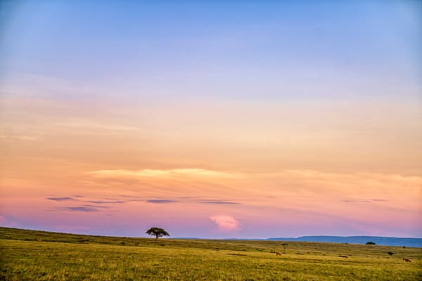 Mara Dawn Photography Art | Carol Brooks Parker Fine Art Photography