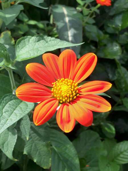 Bronx Botanical Garden Orange Blossom