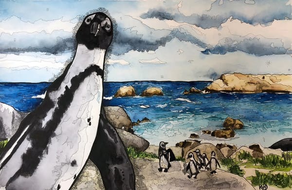 African Penguin   Limited Edition Art | Water+Ink Studios