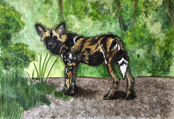 African Painted Dog   Limited Edition Art | Water+Ink Studios