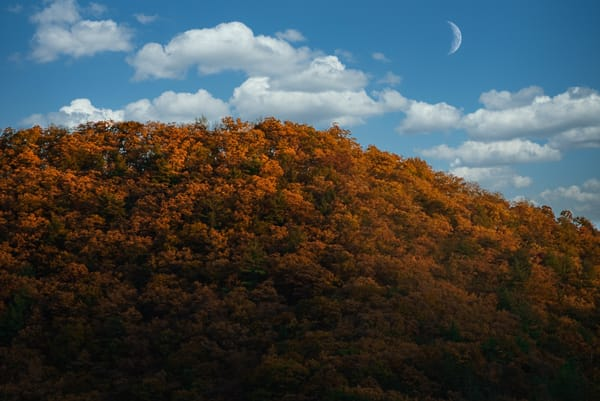 It's Fall Yall Photography Art | Austin Marvel