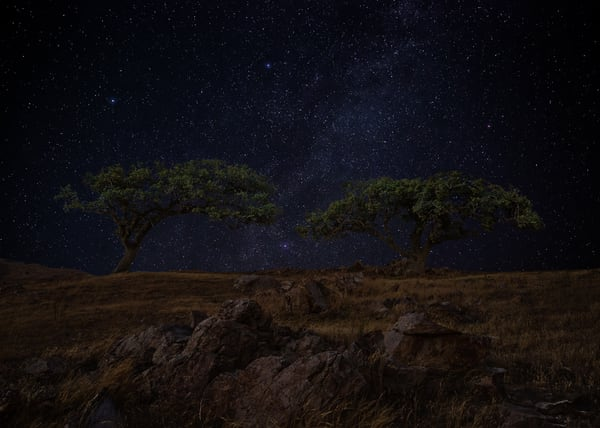 Starry Oak Solitude Photography Art | Josh Kimball Photography