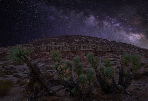 Joshua Tree Starscape Photography Art | Josh Kimball Photography