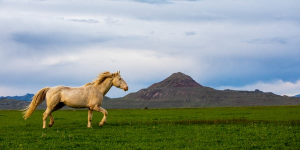 The White Stallion Photography Art | Brokk Mowrey Photography