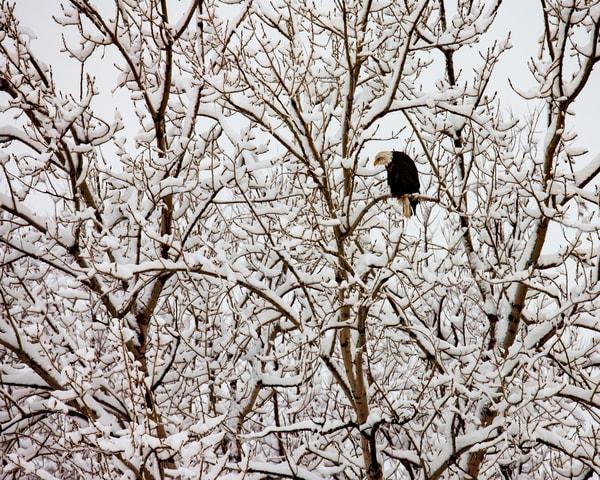 Farmingtonbay December 21 2013 1785 Photography Art | Brokk Mowrey Photography