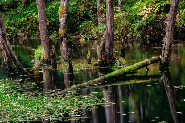 Autumn Pond, Forest Road 49, Washington, 2015