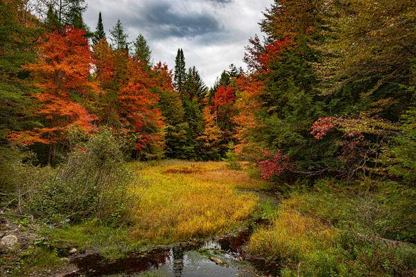 Adirondack Colors  Photography Art   Nelson Rudiak Photography