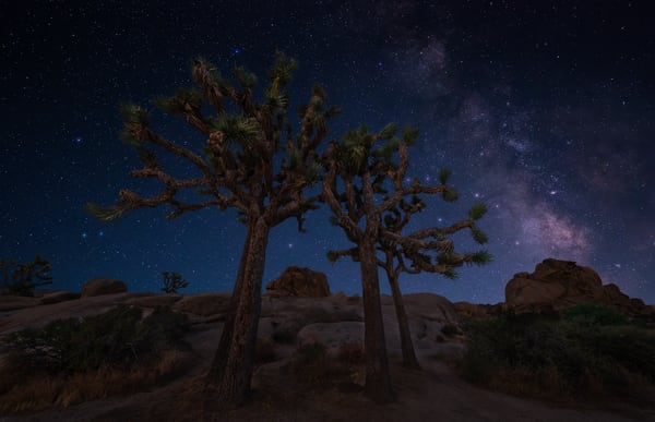 Yucca Starlight Photography Art | Josh Kimball Photography