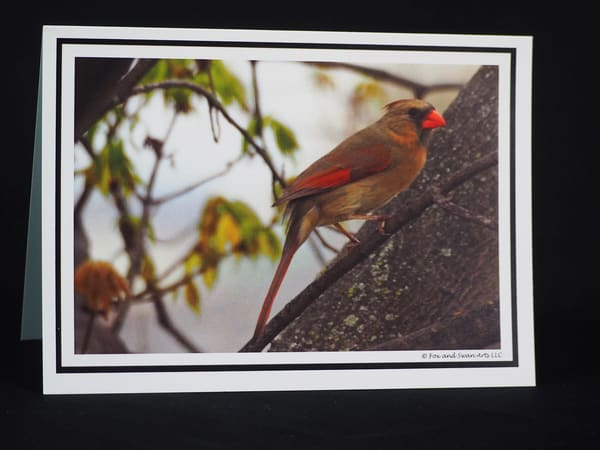 Cardinal in Tree Greeting Card