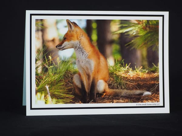 Fox In Woods Greeting Card
