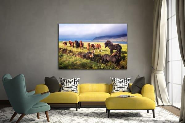 Wild Horses Photography Art | nancyney